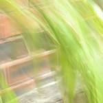 Bamboo Breeze thumbnail