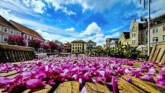 Blütenmeer (pyrolim) Tags: himmel eutin marktplatz zierapfel blüten
