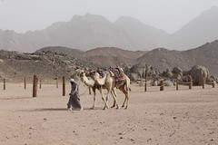 Bedouin man leading camels (sally_byler) Tags: bedouin man camels red sea mountains animals travelling safaga egypt desert