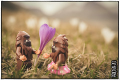 Say it with a flower (Priovit70) Tags: lego minifigures bigfoot themcfoots flowers mountains crocus spring love olympuspenepl7