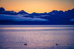 Gentle Dawn (West Leigh) Tags: alaska seward travel travelphotography tranquil sunrise mountains bay harbor water nature naturalbeauty kenai nationalparks north peaceful explore experience dream discover dawn gentle