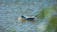 Burton Mere Wetlands (Phil Longfoot Photography) Tags: rspb birds wildfowl wild landscape photo landscapes landscapephotography wirral thewirral cheshire