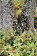 Hortulus Farms  (232) (Framemaker 2014) Tags: hortulus farm garden estate wrightstown pennsylvania bucks county united states america