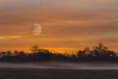 """Morning Moon - 032517-070910 (Glenn Anderson.) Tags: """"moon rise"""" moon fog clouds dawn trees nature nikon morning pasture """"ground fog"""" photoshop cs5 """"clouds storms sunsets sunrises """""""