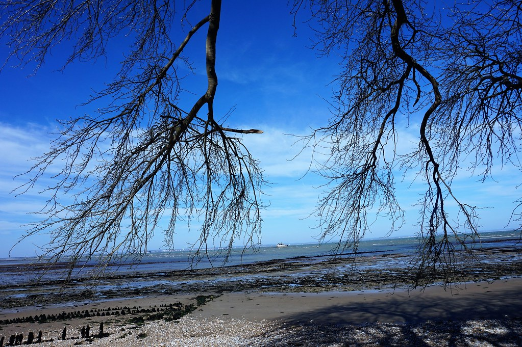 Tree branches on Bembridge Beach 1