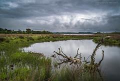 Dead Wood (marc_leach) Tags: landscape reservoir tree clouds water scenic nikon eyebrook leicestershire