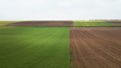 Squared Fields (panfot_O (Bernd Walz)) Tags: field fields landscape rural countryside agriculture soil green spring geometry graphics fineart emptiness minimal minimalism contemplation transformedlandscape landuse