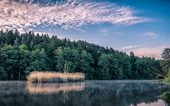 riverside in the early morning (Florian Grundstein) Tags: skyscape riverside reflection mood fog misty trees nopeople natur natural wilderness hike outdoor oberpfalz bayern naab fluss clouds nikon fx fullframe clear grundstein florian island totholz wald pov