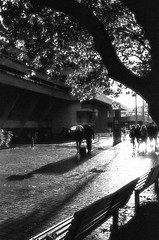 Walking in the rain, Southbank (MCorrigan1983) Tags: 135 2016 400tx bw london nikkor35mmf2d nikonf6 trix400 rain film 35mmfilm 35mm kodak trix kodaktrix400 southbank