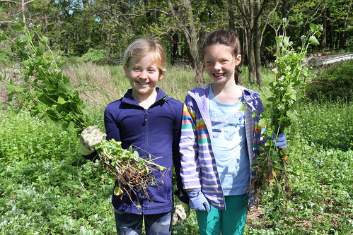 Garlic Mustard Pull Experts!