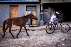 Remolcando. Trinidad (Saurí) Tags: trinidad cuba caballo