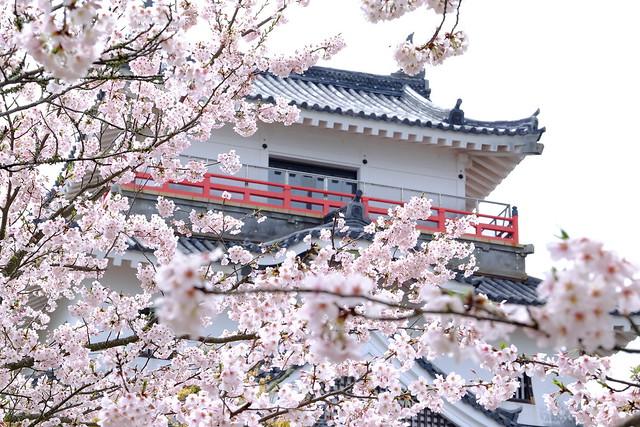 桜の花言葉(種類別)と由来・怖い意味?