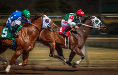 Horse Racing (Inge Vautrin Photography) Tags: animals blue colors green horses horse horseracing racing horsetrack jockey jockeys motion action panning people person red running sport sports oklahoma oklahomacity