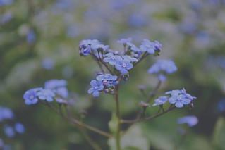 Blå färgSkatt