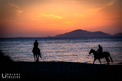 Riding into the sunset (mark surry) Tags: sunset sun set orange silhouette horse riding beach