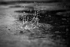 Raindrop explodes (Jonathan Goddard1) Tags: olympus omd em1ii 1240 f28 pro rain raindrop droplets water puddle monochrome dark