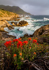 Colorful California Coast (Rod Heywood) Tags: bigsur flowers spring springtime garrapata garrapatastatepark waves surf rocks rocky mountains overcast clouds emerald wildflowers red californiacoast california