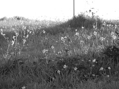 Raking sunlight illuminates the roadside flowers (amgirl) Tags: spain 2017 navarra puentalareina march31 day2 evening