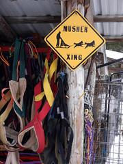 (lmundy2002) Tags: dogs dogsled dogsledding huskies sleds whitefish olney whitefishmt olneymt montana mt winter wintersports