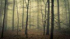 Diving In the Mood (Netsrak) Tags: baum bäume eu europa europe forst januar january landschaft natur nebel wald fog forest landscape mist nature tree trees winter woods rheinbach nordrheinwestfalen deutschland de