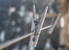 134/365 Weathered (Helen Orozco) Tags: 2017365 clothespegs clothespins washingline weathered wooden canonrebelsl1 bokeh