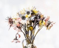 Flowers (Daniela 59) Tags: 100x2017 100xthe2017edition image48100 theworldaroundme mayflowers flowers sunflowers sliderssunday hss textures vase danielaruppel