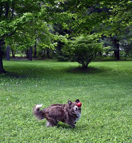 Playing Ball In Her Yard