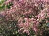** Floraison printanière ** (Impatience_1 (peu...ou moins présente...)) Tags: fleur flower mai may arbre tree m impatience supershot coth fantasticnature alittlebeauty coth5 sunrays5 abigfave