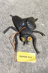 Super Fly (Ben Cooper 1973) (Donald Deveau) Tags: bencooper rubber jiggler fly superfly insect bug toys vintagetoy