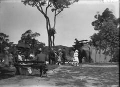 In Taronga Park (State Library of New South Wales collection) Tags: statelibraryofnewsouthwales sydney harbour views zoos taronga architecture buildings