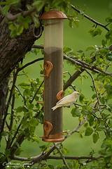 WhiteBirdWpgBeach02 (catherinesproat) Tags: winnipegbeach interlake matlock standrews manitoba yourmanitoba ctvwpg canada150 manitoba411 exploremanitoba