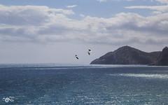 Libertad (R'Lay) Tags: agua mar gaviota nubes azul naturaleza paisaje montañas