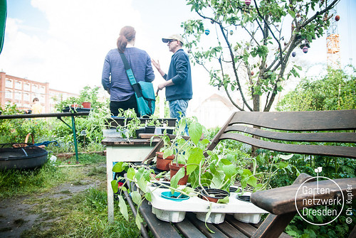 gardeningfromscratch_I_49