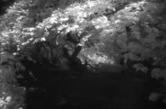 Verborgenes (the future is analog) Tags: analog film bw infrared infrarot efke ir820 aph09 trees tree forest wald woods süntelbuche süntelbuchen dwarf beech fagus sylvatica suentelensis
