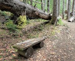 Wood bench in the forest <> Banc dans la forêt (France-♥) Tags: 23 bench wood garibaldiprovincialpark nature forêt whistler bc canada bois