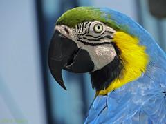 Color it up.. (mark owens2009) Tags: parrot