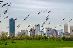 Jersey City (lvphotos!) Tags: newjersey jersey city tall highrise park birds libertypark hudson county travel sightseeing beautiful usa populous populated tourism apartments nature
