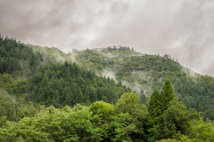 Mist in the mountains (Alex GATTE Photographie) Tags: mist mountain nature landscape natural wood three forest sky green