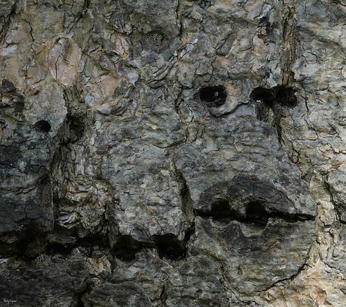 """tree trunk faces • <a style=""""font-size:0.8em;"""" href=""""http://www.flickr.com/photos/52364684@N03/33532301384/"""" target=""""_blank"""">View on Flickr</a>"""