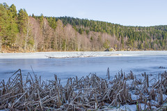 Lutvann (morten f) Tags: lutvann oslo norway trosterud østmarka marka nature natur norge tree ice tre is winter vinter cold kaldt frosset frozen lake water innsjø vann forest skog 2017
