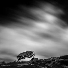 Resilience (Mick Blakey) Tags: slowexposure rugged cornish nature rocky moody boulders blackwhite tree shadows solitude contrast moor cheesewring bobminmoor moorland moving solitary black silhoette monochrome cornwall clouds dramatic