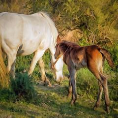 Camargue Painting 3 (Xtian du Gard) Tags: camargue cheval horse jument poulain mare colt nature painting digitalpainting art digiart xtiandugard