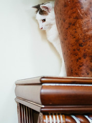 Chip (Garen M.) Tags: jojo chip buttercup vintagelens companionanimals olympuspenf chicklet cats zuiko26mmf28