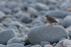 glan môr-2597 (www.atgof.co) Tags: rockpipit ceredigion cardigan bay seaside pebble beach traeth clarach