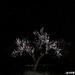 Night shift bloom