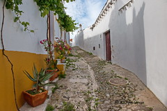 Medieval Street (joeinpenticton Thank you 1.4 Million + views) Tags: medieval street cobble stone pavement paved muslim joeinpenticton joe jose garcia mosque church mertola portugal alley narrow grape vines grapes vine flower flowers castle town city walled wall guadiana river alem rio beja moslem islam