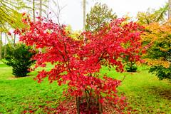 westonbirt arboretum - autumn colors - heart (vinothgurusamy) Tags: heart autumn colors westonbirt arboretum d810 nikon 2485