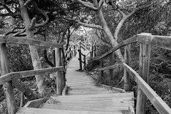 Descent (JoshElsdon) Tags: bnw bw black white queensland australia stairs descend trees beach wood plants boarding decking