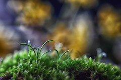 Destellos (hequebaeza) Tags: naturaleza nature florasilvestre vegetación vegetation nikon d5100 nikond5100 ebcfujinon1450mm fujinon 50mm m42 tubosdeextensión macro hequebaeza macromondays intothewoods