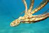IMG_0076 copy (Aaron Lynton) Tags: lyntonproductions sand design tako ocean octopus art cephalopod canon g1x maui hawaii paradise dakine backround
